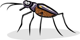 Tiger beetle. Isolated illustration  fastest insect Stock Image