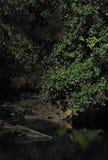 Tiger bei Waterhole, Nationalpark Ranthambhore, Rajasthan, Indien lizenzfreie stockfotos
