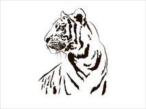 Free Tiger Big Cat Leopard Lion Pantera Yaguar Wild Black White Face Portrait Nature .Svg .Eps .Png Clipart Vector Tattoo Royalty Free Stock Photography - 178345627