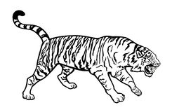 Tiger black and white royalty free illustration