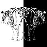 Tiger black and white reflection. Stock Photography