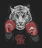 Tiger in boxing gloves and lettering print design for t-shirt.  Royalty Free Stock Images