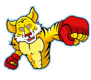 Tiger Boxing Stock Photography