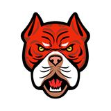 Tiger Bulldog Head Front Mascot rouge Photographie stock libre de droits