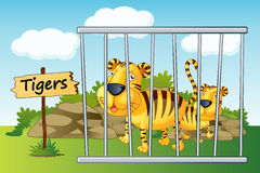 Tiger in cage. Illustration of a tiger in cage and wooden board Royalty Free Stock Images