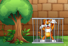 A tiger in a cage made of steel Royalty Free Stock Photo
