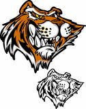 Tiger Cartoon Mascot Vector Illustration. Vector Illustration of Tiger Mascot Cartoon Royalty Free Stock Image