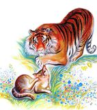 Tiger and cat Royalty Free Stock Image