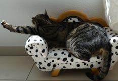 Tiger Cat Foto de archivo