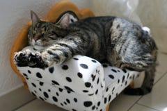 Tiger Cat Imagen de archivo