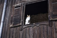 Tiger cat looks out of window in the upper floor of a barn, Bavaria, Germany royalty free stock photo