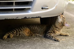 Tiger cat lying under the car and sniffs them Royalty Free Stock Photography