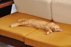 Tiger Cat Sleep Sofa Royalty Free Stock Photography