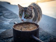 Tiger cat walking on the beach in Greece on sunset royalty free stock image