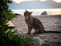 Tiger cat walking on the beach in Greece on sunset stock photos
