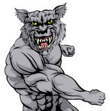Tiger character punching. An illustration of a mean looking wolf or werewolf animal sports mascot punching Stock Photo