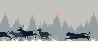 Tiger chasing deer Stock Image