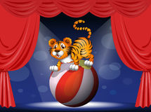A tiger in a circus Stock Images