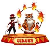 Tiger Circus Show su fondo bianco illustrazione vettoriale