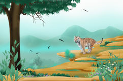 A tiger on the cliff. Dangerous big bengal tiger on the cliff Stock Photography