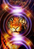 Tiger collage on color abstract background and. Light circle, rust structure, wildlife animals, computer collage stock illustration
