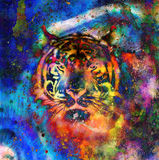 Tiger collage on color abstract  background,  rust structure, wildlife animals. Stock Photo