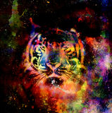 Tiger collage on color abstract  background,  rust structure, wildlife animals. Royalty Free Stock Images