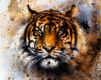 Tiger collage on color abstract  background,  rust structure, wildlife animals, eye contact.. Stock Image