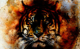 Tiger collage on color abstract  background,  rust structure, wildlife animals, eye contact Stock Images