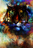 Tiger collage on color abstract background, rust structure, wildlife animals, eye contact. Royalty Free Stock Photography