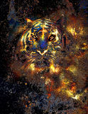 Tiger collage on color abstract  background Royalty Free Stock Photography