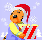 Tiger color 05 Stock Photos