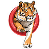 Tiger. Creation and development of vector graphics and illustrations Royalty Free Stock Photos