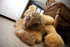Tiger Cub. Tiger plays with a Teddy bear Stock Image