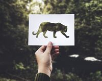 Tiger cut out on card Stock Photos