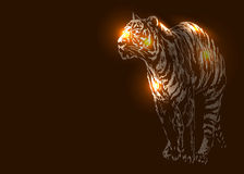 Tiger on a dark background Stock Photo