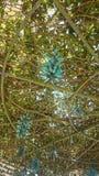 tiger& x27 del fiore; piedi di s Immagine Stock