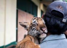 Tiger des Babys drei getragen in Ragunan Zoo-Jakarta am 10. April 2013 Stockbilder