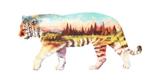 Tiger double exposure illustration. The tiger on white background double exposure illustration. Retro design graphic element. This is illustration ideal for a Stock Image