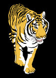 Tiger draw Stock Photos