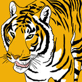 Tiger draw Royalty Free Stock Photo