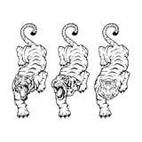 Tiger eingestellt Lizenzfreie Stockfotografie