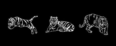 Tiger emblem set Royalty Free Stock Photo