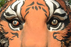Tiger eye Stock Images