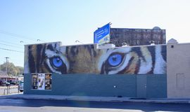 Tiger Eyes at the Highland Strip, Memphis, Tennessee. The University of Memphis mascot a tiger painted on a building at the Highland Strip in Memphis, Tennessee stock photo