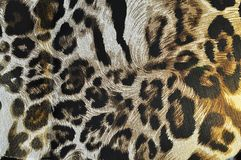 Tiger fabric Stock Images