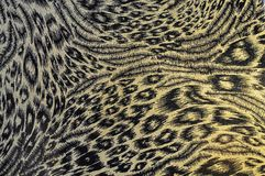 Tiger fabric Royalty Free Stock Photos