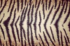 Tiger fabric texture Stock Photo
