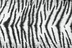 Tiger fabric texture Stock Photos