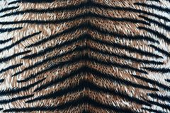 Tiger fabric texture. Close up tiger fabric texture royalty free stock photography